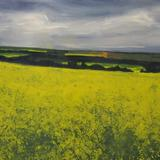 yellow field: sherbrooke
